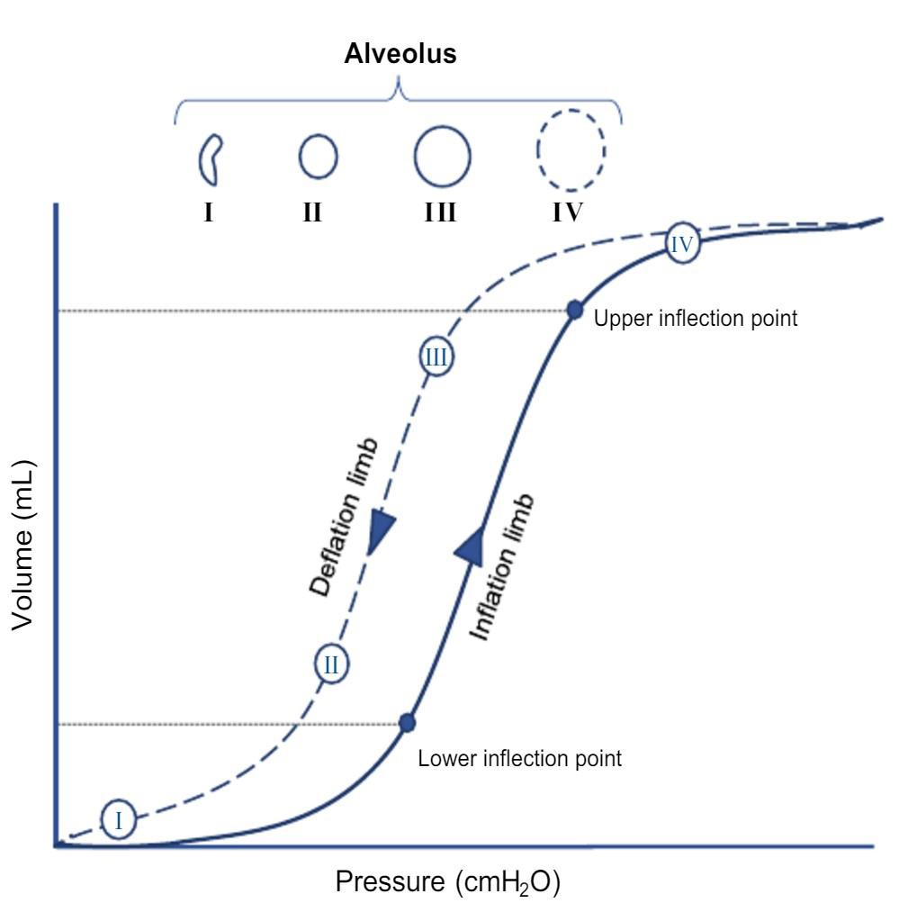 Σχήμα 1. Καμπύλη P – V αναπνευστικού συστήματος37